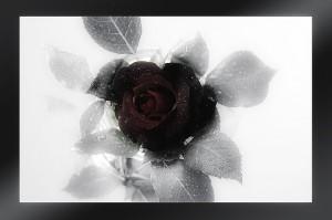 Trauersprüche (18)
